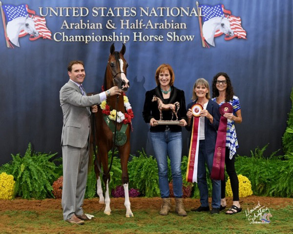 Always In Vogue: 2016 U.S. Reserve National Champion Half-Arabian Yearling Filly - Shown by Jason Daniels